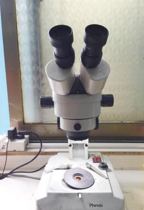 体式显微镜.jpg